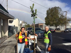 Notice more trees around town? Here's why