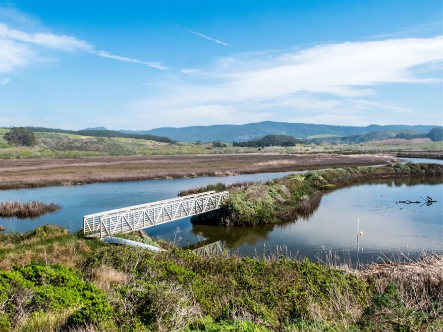 Year-long project launches to improve Butano Creek