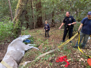 San Mateo County first responders pull horse from ditch