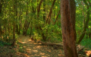 San Mateo County to reopen trails in 13 of its 23 parks on May 4