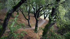 Midpen closes San Mateo County preserves on Saturdays and Sundays