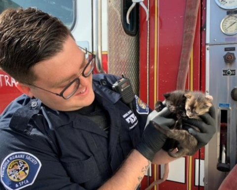 PHS/SPCA: Kittens found living fire engine truck compartment