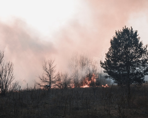 Property owners get green light to remove certain flammable trees