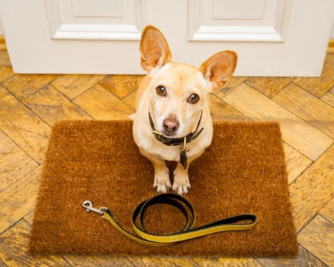 San Carlos reminds community members to leash their dogs