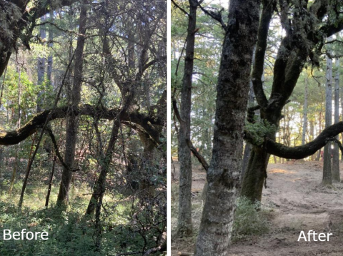 Wunderlich Park trails reopen after 58 acres treated to reduce fire risk